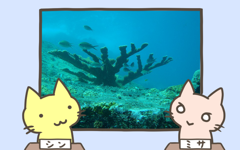 日本最大のサンゴ礁