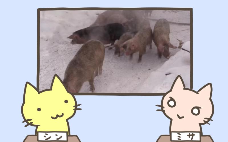 農場で火災発生 150匹の子豚が救出される