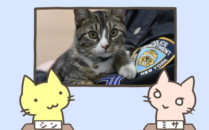 ボス 署内で子猫を飼いたいであります 猫のお巡りさん 爆誕