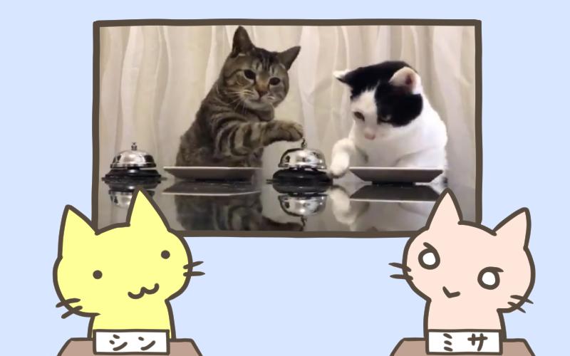 猫 エサを前にして驚きの学習速度