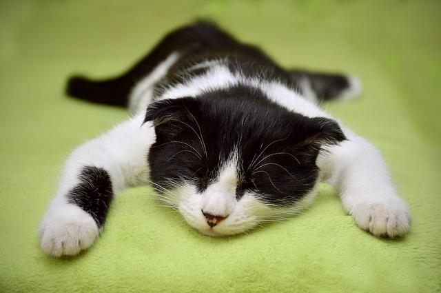 Cat 2605502 640