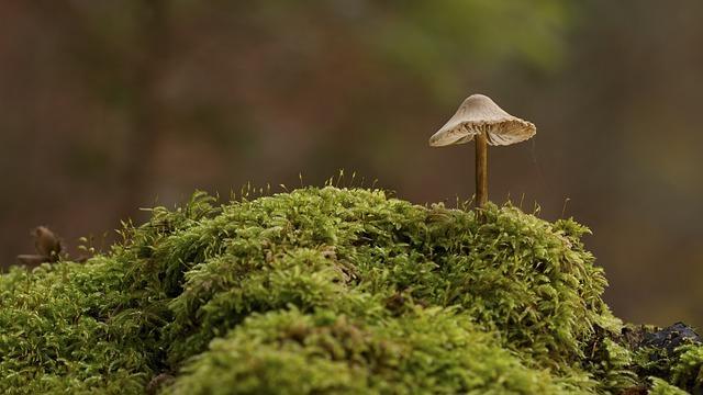 Mushroom 2206588 640