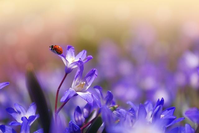 Flower 1331744 640