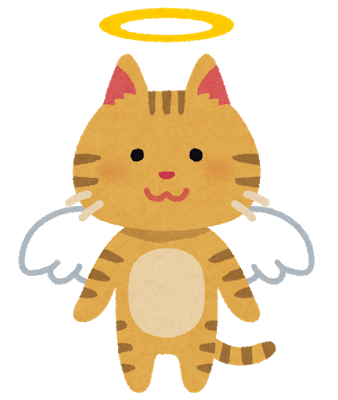 Pet angel cat