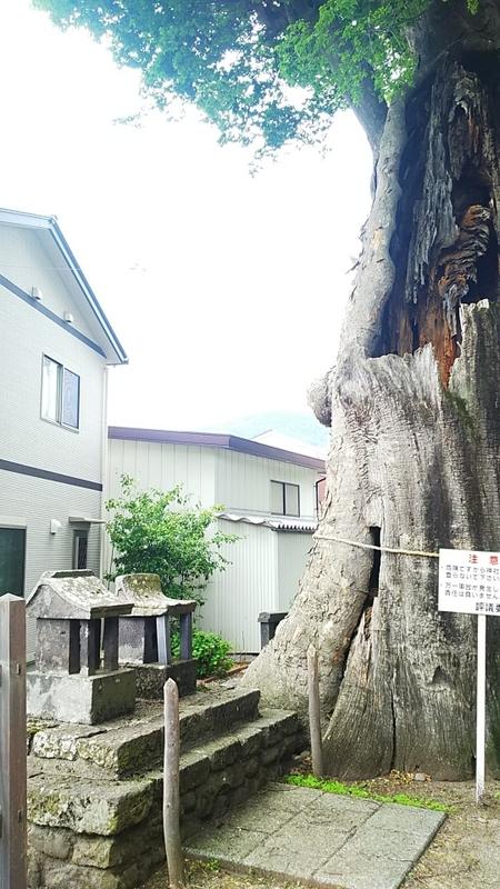 f:id:sister-akiho:20210612223746j:plain
