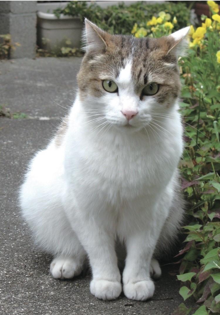 猫 きーちゃん の写真