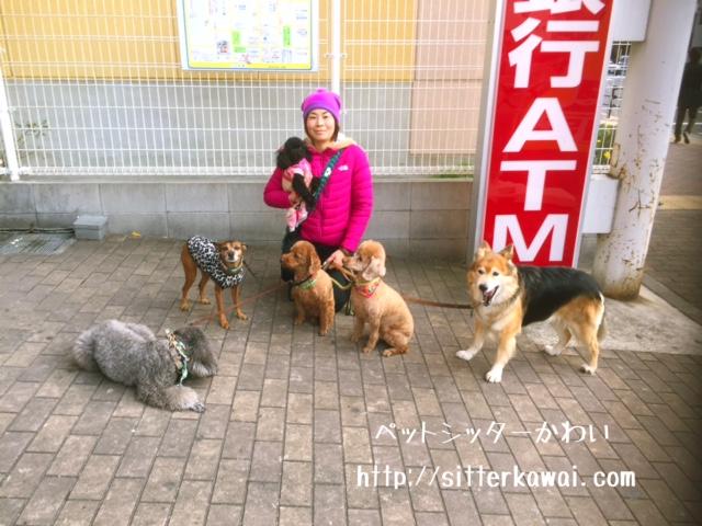 f:id:sitterkawaikobe:20170119191050j:plain