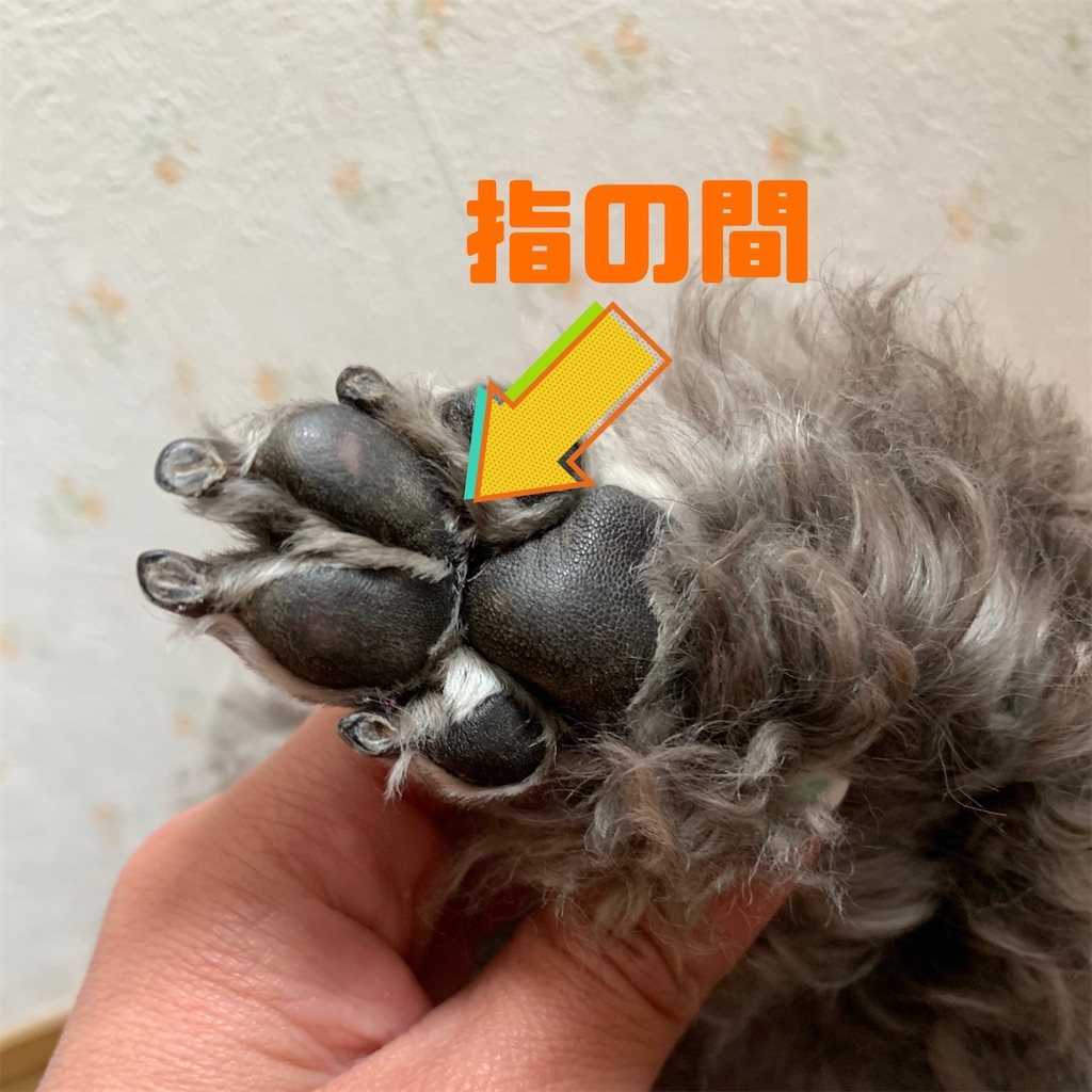f:id:sitterkawaikobe:20210526155222j:image