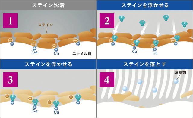 歯を白くする効果アリ|着色予防効果も?