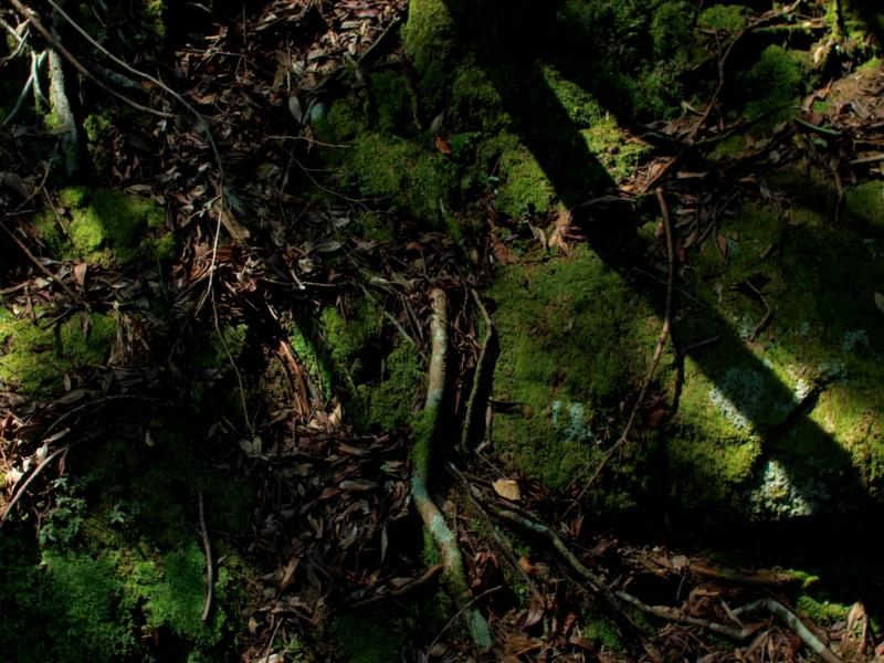 f:id:skaba:20100829151547j:image