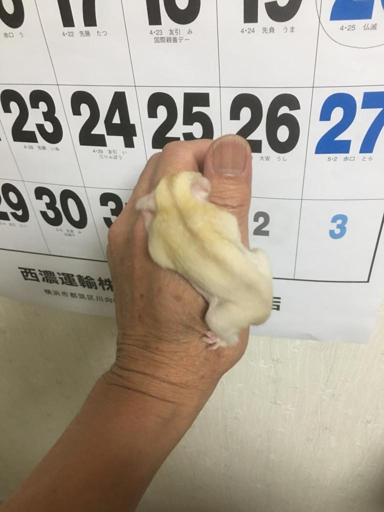 f:id:skingyokohama:20170502224422j:plain