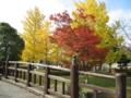 千波湖 湖畔 (茨城県水戸市)