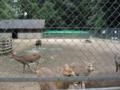 鹿島神宮の鹿 (茨城県鹿嶋市)
