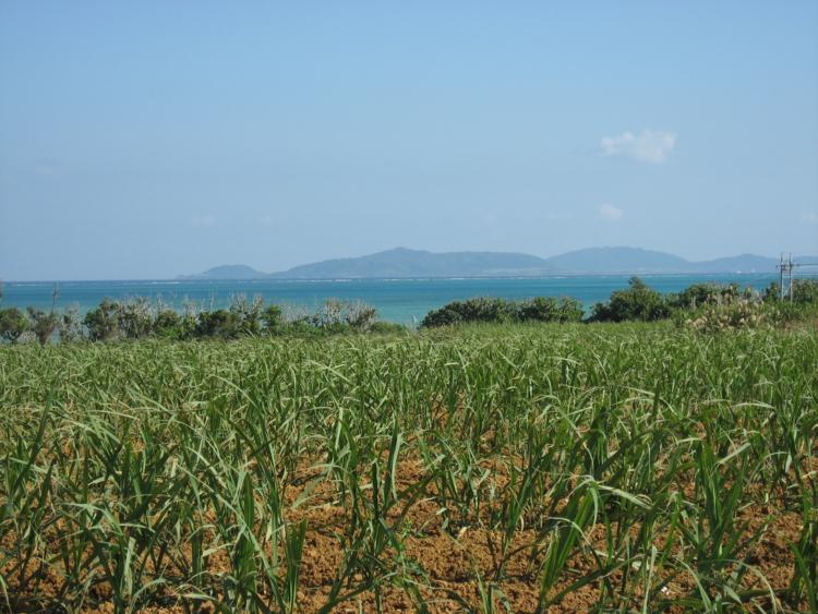 小浜の風景  (小浜島)
