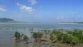 マングローブが広がる石長田海岸 (小浜島)