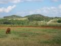 小浜島の馬 (小浜島)