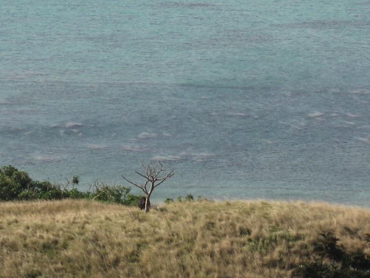 和也の木  (小浜島)