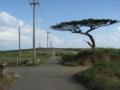 シュガーロード (小浜島)