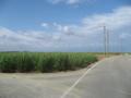 さとうきびの収穫が始まった波照間島  (波照間島)