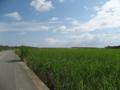 さとうきび畑 (波照間島)
