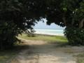 コンドイビーチへ  (竹富島)