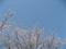 桜の花びらが舞う日本平の桜