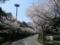 満開の日本平スタジアム (静岡県静岡市清水区)