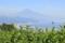 富士山 (静岡県静岡市 日本平)