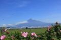 富士川河川敷からの富士山(静岡県富士市)
