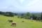 まかいの牧場(静岡県富士宮市)