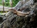 カナヘビの日向ぼっこ