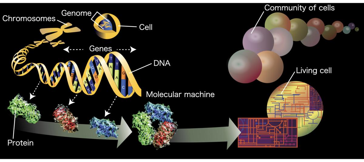 https://en.wikipedia.org/wiki/Omics#/media/File:Genome-en.svg