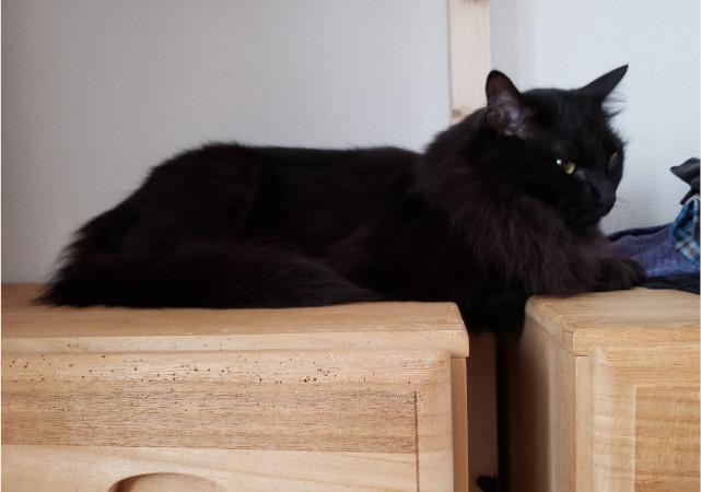チェストを越えた黒猫