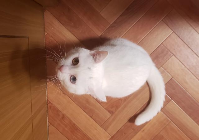 ドアの前で拗ねる白猫