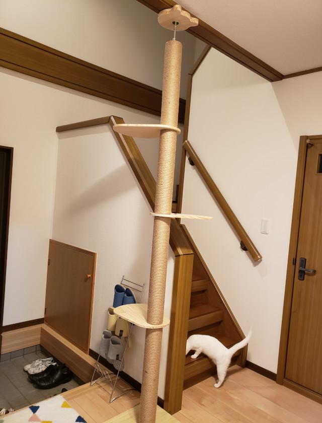 ステップで上まで上がれるキャットタワー