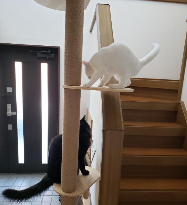 3kgと6kgの猫が乗ってもOKだった