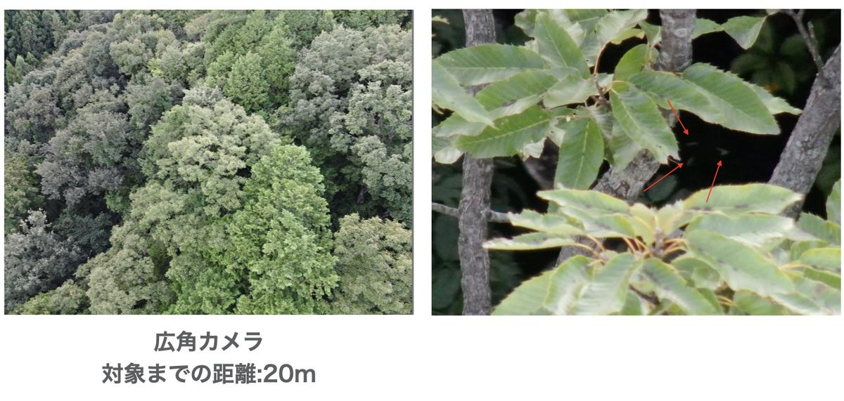 f:id:skyeye-japan:20201103014733j:plain