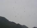 f:id:skypark:20111105170735j:image:medium