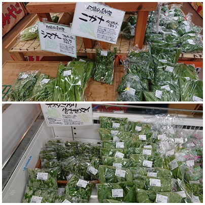 local-vegetable-miyakojima