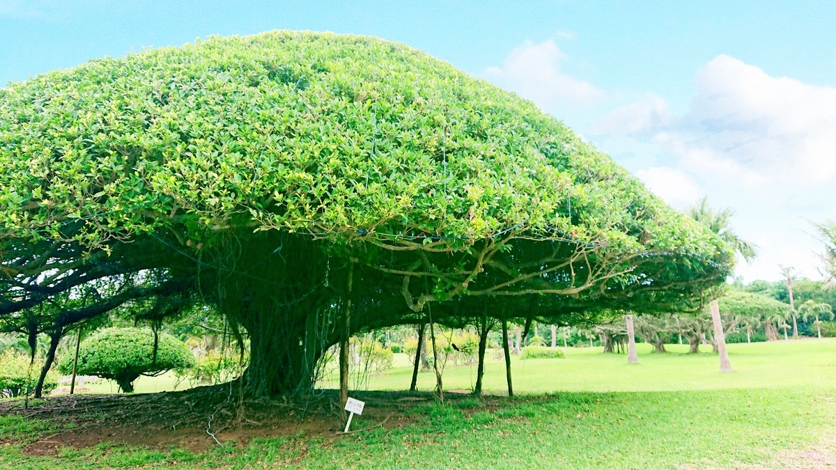 big-tree-tokyu-hotel-miyakojima