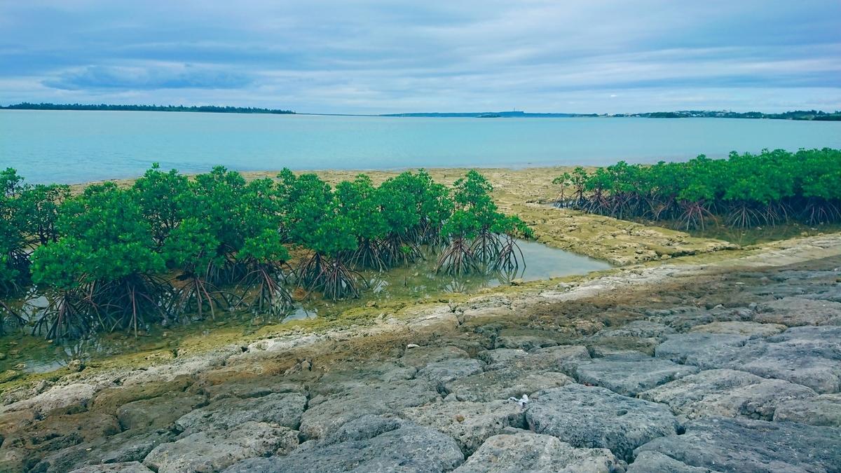 miyakojima- mangrove
