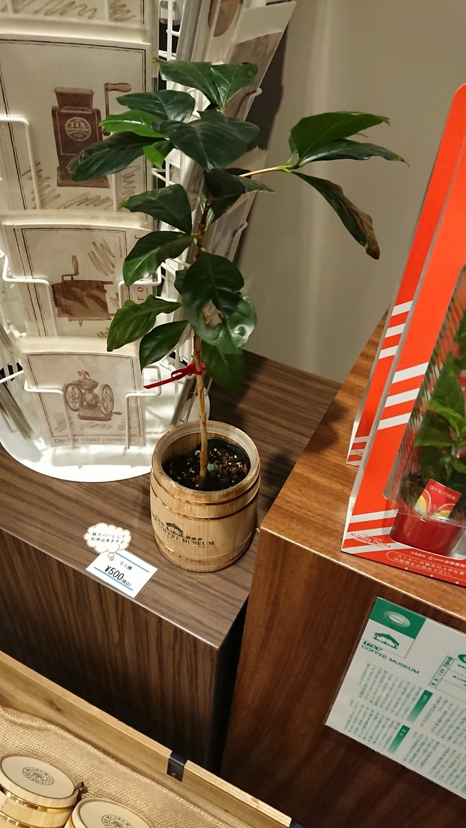 coffee-plant-ucc-kobe-gift-shop