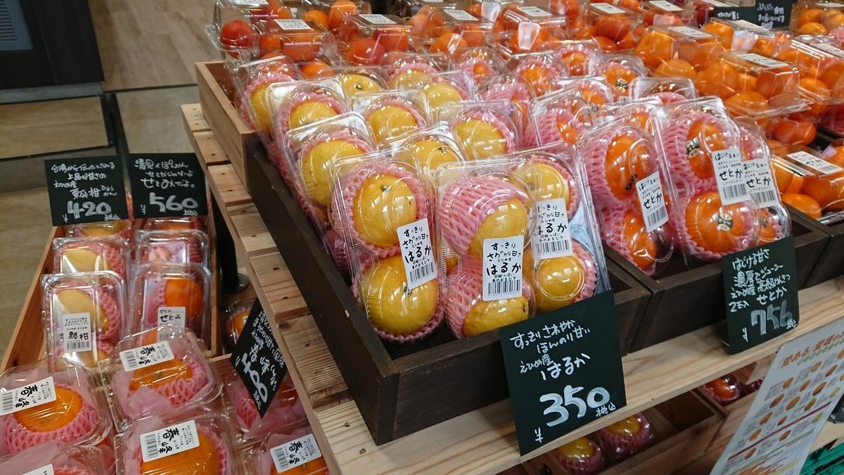 setoka-orange-ehime