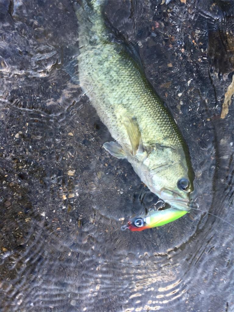 f:id:slackfish:20160801233950j:image