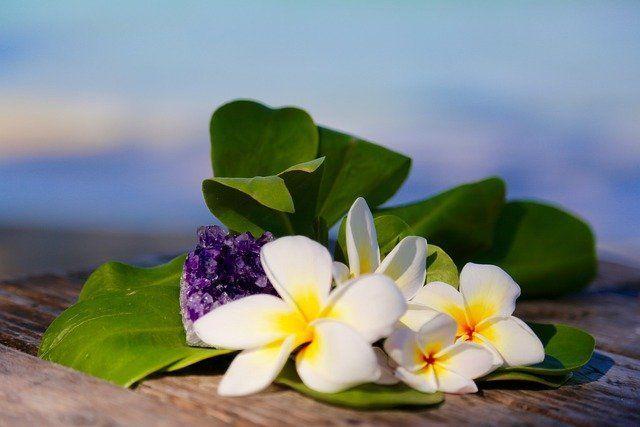 ハワイの花の写真