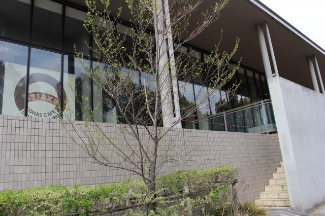 武蔵野大学 ロハスカフェARIAKE