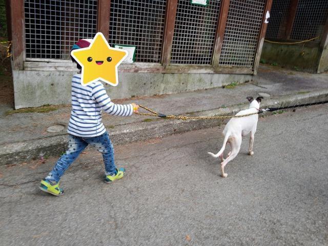 富士すばるらんど 犬とお散歩