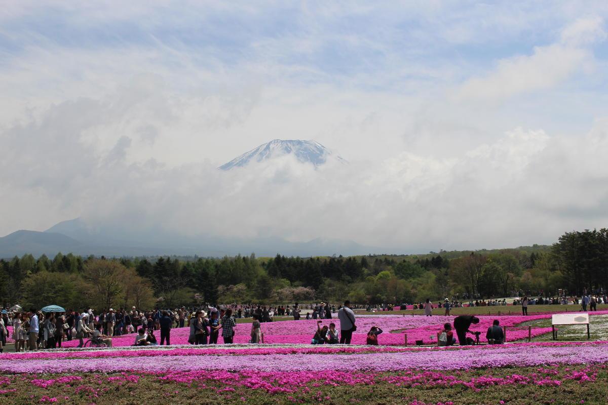 本栖湖 芝桜と富士山