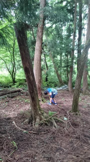 白馬 カブトムシの森