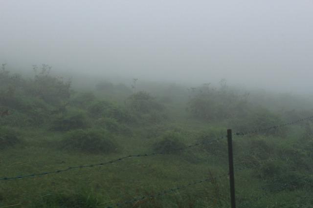 四国カルスト 霧